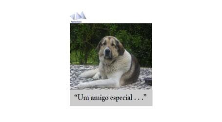 Um amigo especial